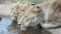 Lion and Safari Park Half-Day Tour from Johannesburg and Pretoria, Pretoria, Half-day Tours