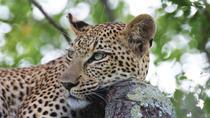 Marataba Safari Lodge Tented Suite, Johannesburg, Multi-day Tours