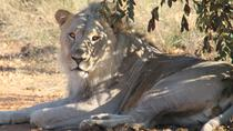 Pilanesberg National Park and Lesedi Cultural Village Full Day Tour, Johannesburg, Full-day Tours