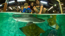 Irukandji Shark and Ray Aquarium Entry Ticket with Optional Shark Experience, Port Stephens, ...