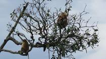Brunei Proboscis Monkey River Safari Shore Excursion Tour, Bandar Seri Begawan, Ports of Call Tours