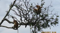 Brunei Proboscis Monkey River Safari with Exclusive Water Village Tour, Bandar Seri Begawan, ...