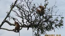 Brunei Proboscis Monkey River Safari with Exclusive Water Village Tour, Bandar Seri Begawan,...