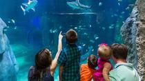 SEA LIFE Helsinki Super Ticket Including Free Guidebook and Behind-the-Scenes Tour, Helsinki, ...