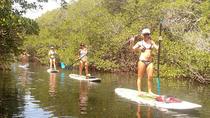 2 hour Eco Tour on Kayaks or Paddleboards, Islamorada, Stand Up Paddleboarding
