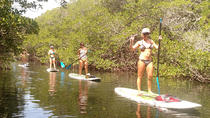 2 Hour Kayak or Paddleboard Eco Tour, Islamorada, Stand Up Paddleboarding