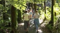 Valley Movie Tour from Wellington, Wellington, Walking Tours