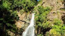 El Yunque Rainforest Hiking from San Juan, San Juan, Full-day Tours