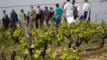 Tour of a Vineyard, Winery and Cellar Including Wine Tasting in Vouvray in the Loire Valley, Tours, ...