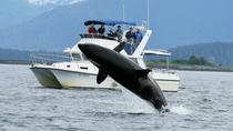 Whale Watching and Wildlife Adventure from Juneau, Juneau, Dolphin & Whale Watching