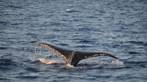 Whale of a Sunset, Maui, Dolphin & Whale Watching