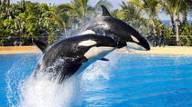 1-day Trip to Loro Parque in Tenerife from Gran Canaria - CHILDREN GO FREE, Gran Canaria, Day Trips