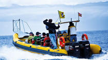 2-Hour Dolphin and Whale Watching by Little Boat in La Palma, La Palma, Day Cruises