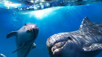 2-Hour Dolphin and Whale Watching in Gran Canaria, Gran Canaria, Day Cruises