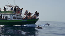 3-Hour Dolphin and Whale Watching by Big Boat in La Palma, La Palma, Day Cruises