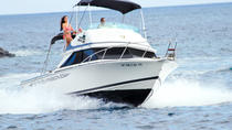 3-Hour Whale and Dolphin Watching in Tenerife, Tenerife, Day Cruises