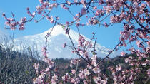 4-hour Almond Blossom Tour in Valle de Santiago, Tenerife, Walking Tours
