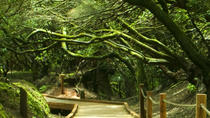 4-Hour Trekking Tour in Anaga Nature Park, Tenerife