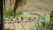 Camel Ride in Fataga with BBQ, Gran Canaria, Nature & Wildlife