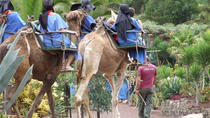 Camel Riding Tour at El Tanque, Tenerife, Nature & Wildlife
