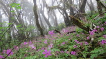 Combined Hiking Route in The Garajonay National Park and La Gomera Ravines, Canary Islands, Hiking ...