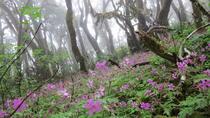 Combined Hiking Route in The Garajonay National Park and La Gomera Ravines, La Gomera, Hiking &...