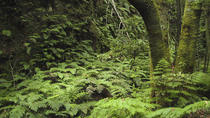 Hiking tour across the Enchanted Forest, La Palma, Hiking & Camping