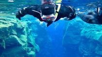 Las Canteras Beach Snorkeling Tour, Gran Canaria, Snorkeling
