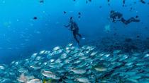 Scuba Diving for Licensed Divers in Arinaga, Gran Canaria, Scuba Diving