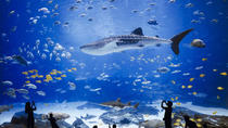 Ticket to Poema del Mar Aquarium and Visit to Las Palmas de Gran Canaria City, Gran Canaria, ...