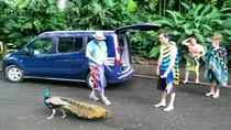 Shaka Tours Private individuelle Tour, Oahu, Custom Private Tours