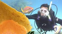 PADI Discover Scuba Diving in Cozumel, Cozumel, Scuba Diving