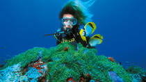 PADI Discover Scuba Diving in Montego Bay
