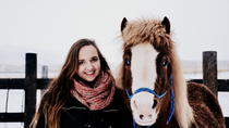 Photograph and feed Icelandic horses, Akureyri