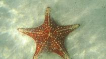 Starfish Beach- Stingray City and Snorkeling at Barrier Reef, Îles Caïmans