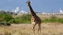 Nairobi National Park Day Trip in Kenya, Nairobi, Nature & Wildlife