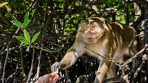 Private Monkey Jungle Cruise: Phuket Day Eco Tour , Phuket, Private Sightseeing Tours