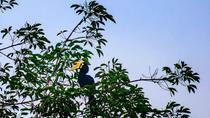 Private Tour: Bird Watchers Paradise in Phuket, Phuket, Private Sightseeing Tours