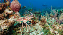 Lobster and Lion Fish Charter, St Thomas, Fishing Charters & Tours
