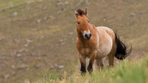 KHUSTAI NATIONAL PARK ONE DAY PRIVATE TOUR (Przewalski's horse), Ulaanbaatar, Private Day Trips