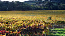 Private Napa Valley Wine Tour, San Francisco, Wine Tasting & Winery Tours