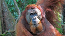 3 Days 2 Nights Bukit Lawang & Orangutans, Medan, Multi-day Tours
