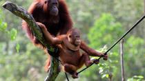 Full-Day Orangutan Explorer, Medan, Day Trips