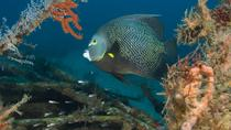 Two Small Group Dives in Grenada Marine Park With Hotel Pickup, Grenada, Scuba Diving