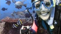 Byron Bay 3-Hour Certified Dive Tour, Byron Bay, Scuba Diving