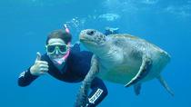 Byron Bay Sea Turtle Snorkel Tour, Byron Bay, Snorkeling