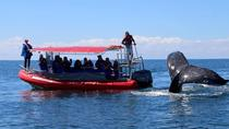 Byron Bay Whale Watching Cruise, Byron Bay, Dolphin & Whale Watching