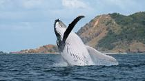 Half-Day Byron Bay Whale Watching Cruise, Byron Bay