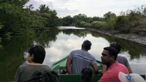 Layover Bird Sanctuary Tour, Trinidad, Layover Tours