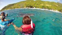 Private Tour: Whale Shark Snorkeling in Sumilon Island from Cebu, Cebu, Private Sightseeing Tours
